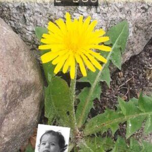 Forsidebillede fra e-bogen Mælkebøttebarn i blomst - campbell.dk